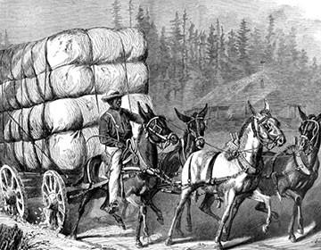 Pambıqçılığın inkişaf tarixi